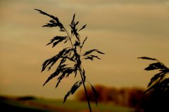 Dal-Dy-Dir-Grass