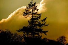 Dal-Dy-Dir-Tree
